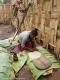 La 'piadina' etiope