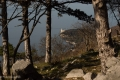 Sul sentiero napoleonico - ritorno attraverso il bosco