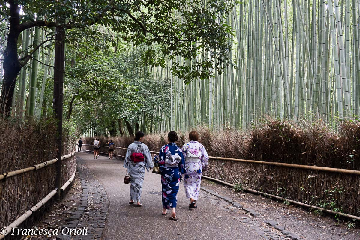 Kyoto Bosco bambu