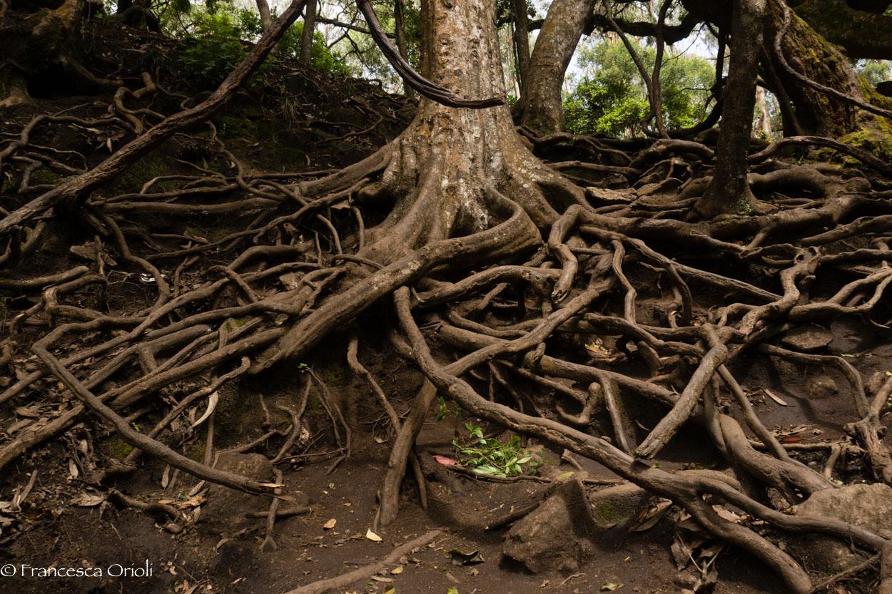 Kodaikanal Guna Cave