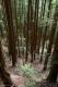 Sentiero nel bosco