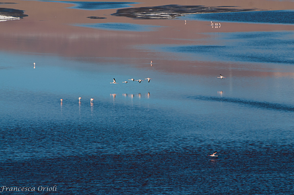 Lagune-bolivia-07