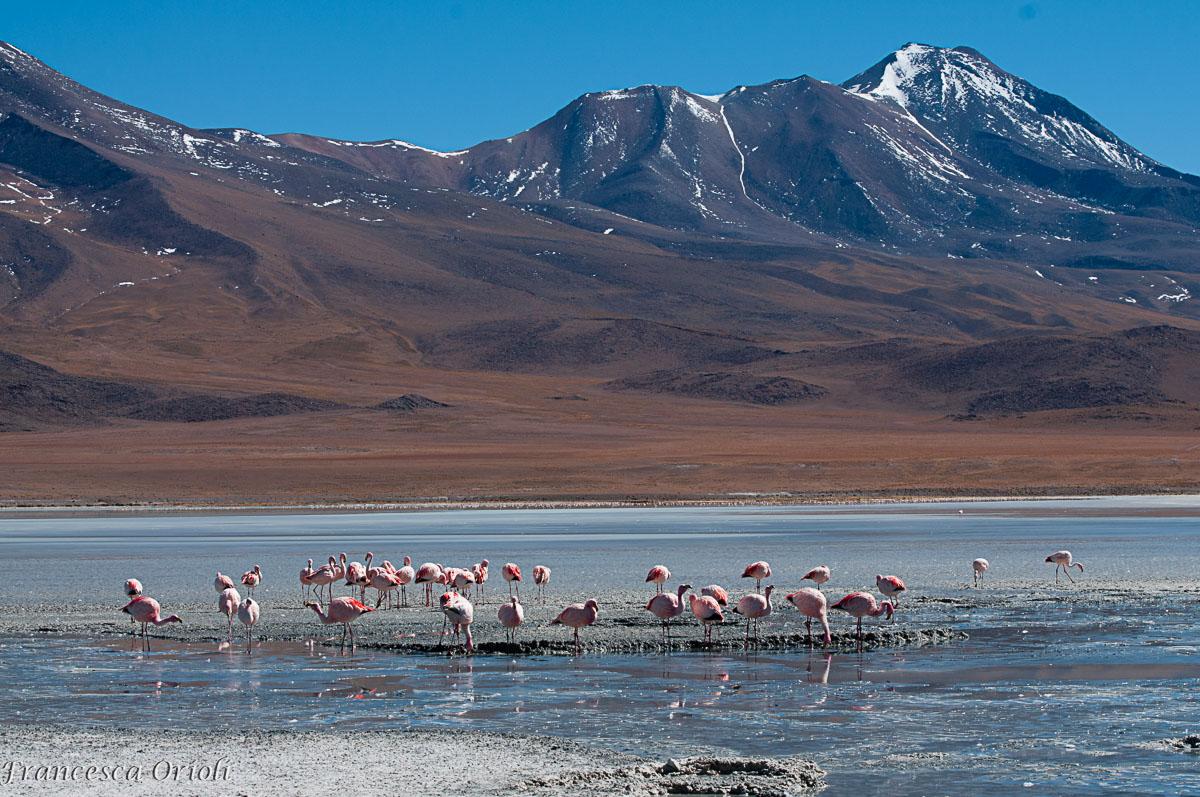 Lagune-bolivia-13