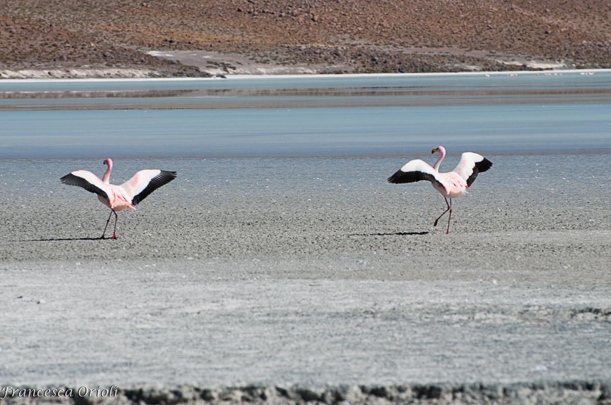 Lagune-bolivia-15