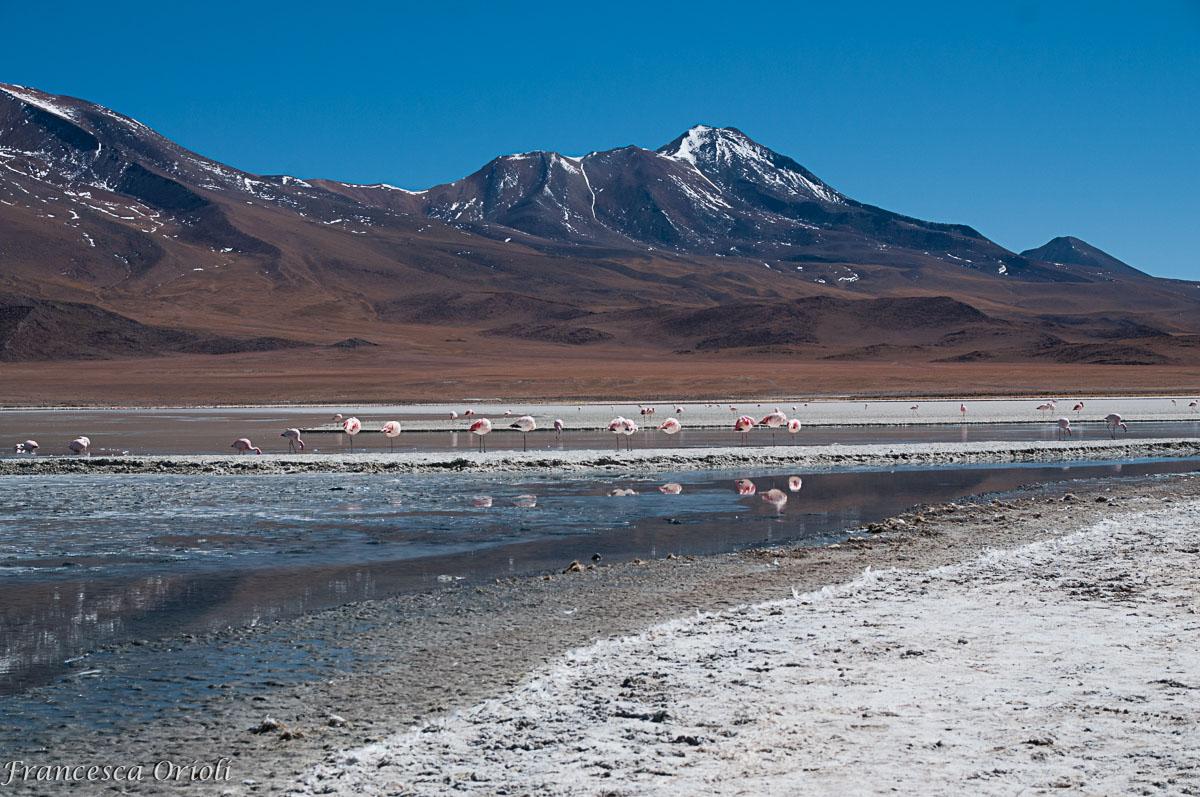 Lagune-bolivia-16