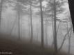 III gg, nebbia nel bosco