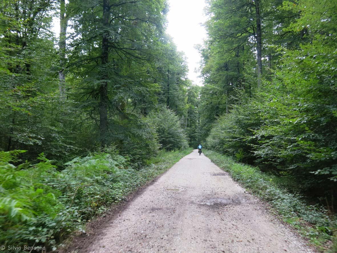 Sesta tappa - foresta di Irati