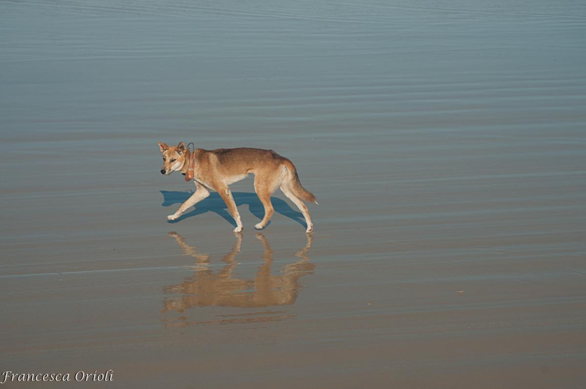 Fraser-Island-34