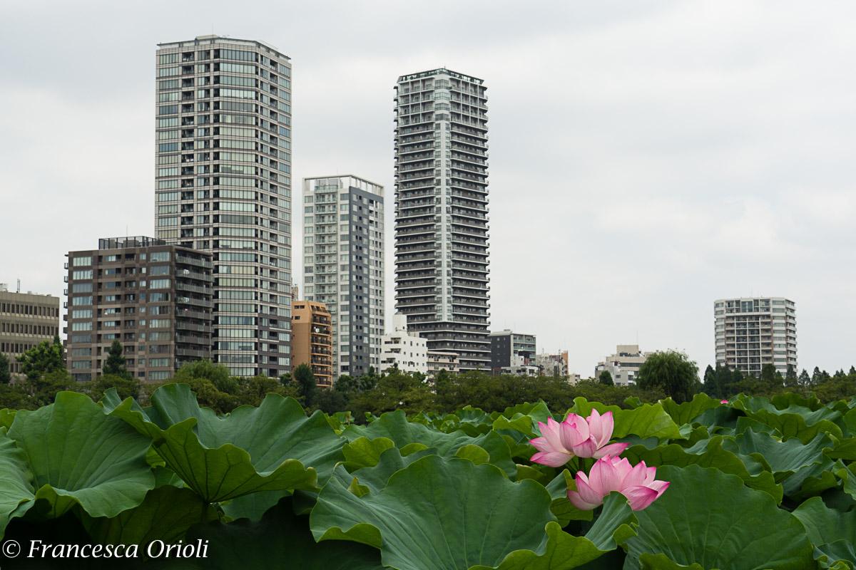 Tokyo parco Ueno