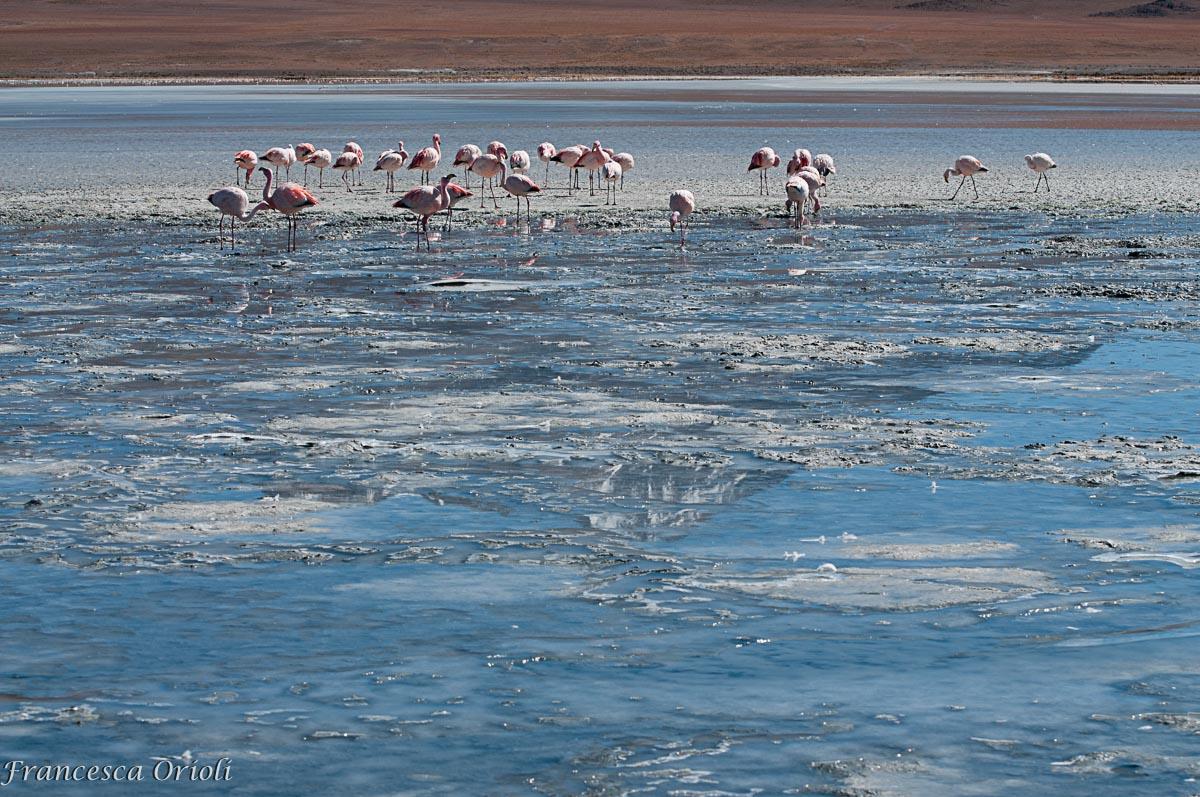Lagune-bolivia-14