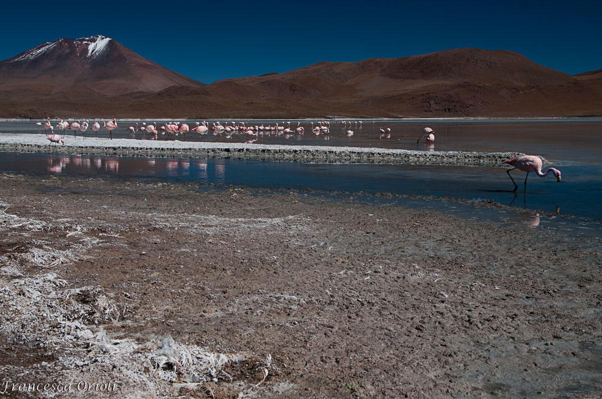 Lagune-bolivia-19