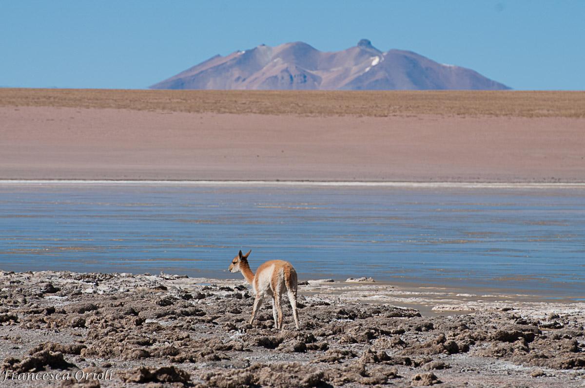 Lagune-bolivia-24