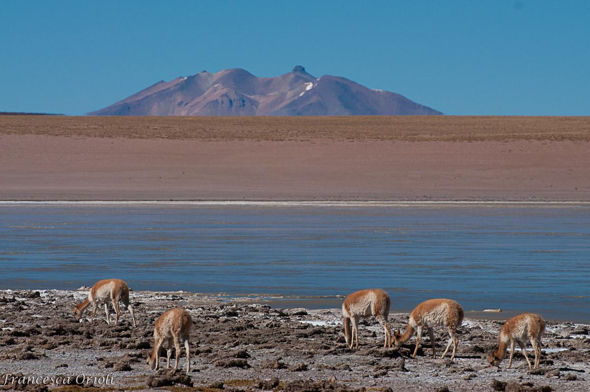 Lagune-bolivia-25