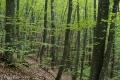 Il bosco prima di Pian della Mora
